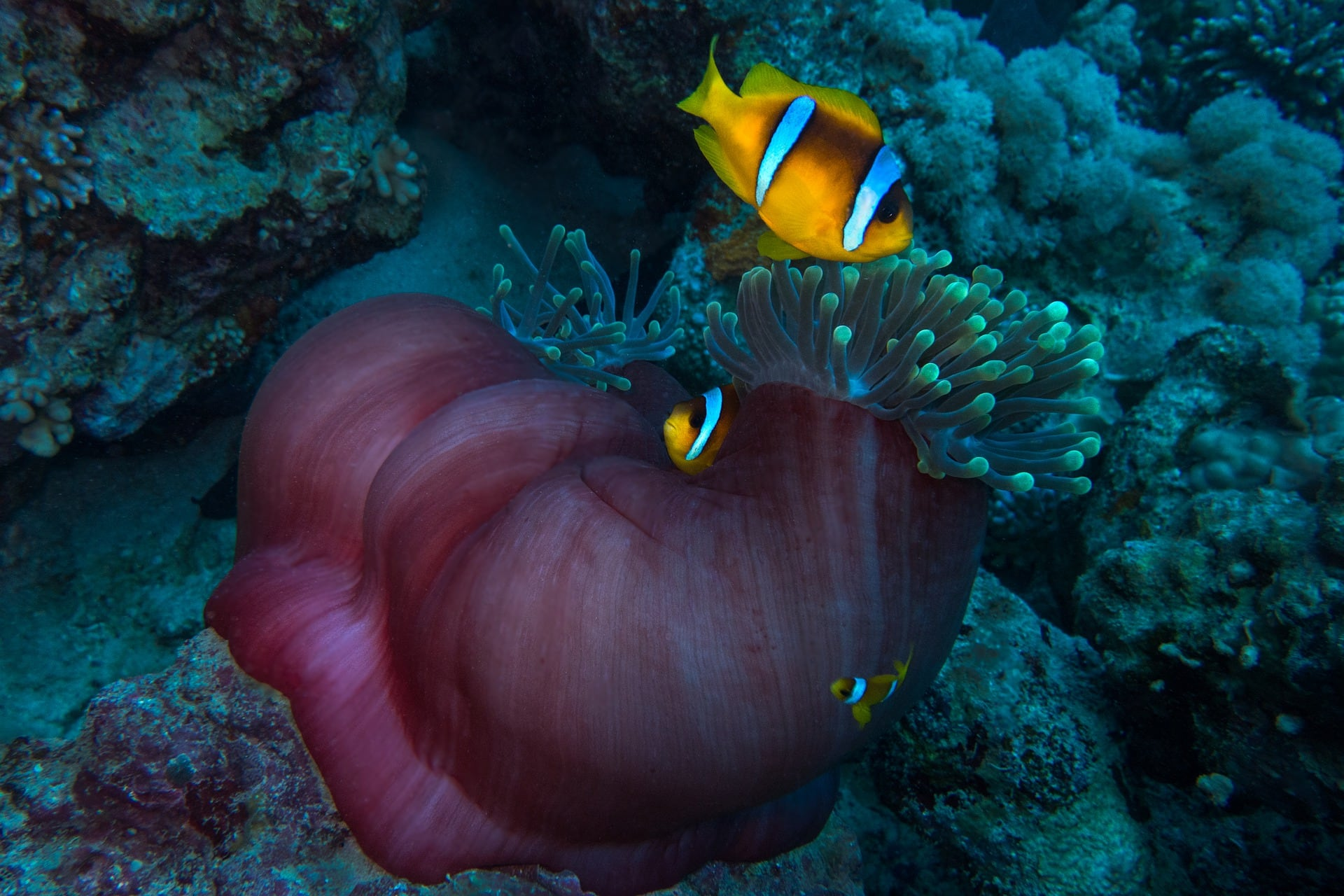 //d1y4y2hb9hjzna.cloudfront.net/sites/default/files/revslider/image/clown-anemonefish-4227162_1920_0.jpg